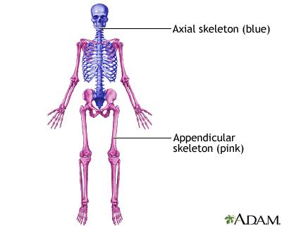 19844 skeletal system information